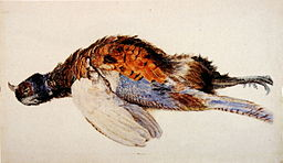 Dead_Pheasant_Ruskin